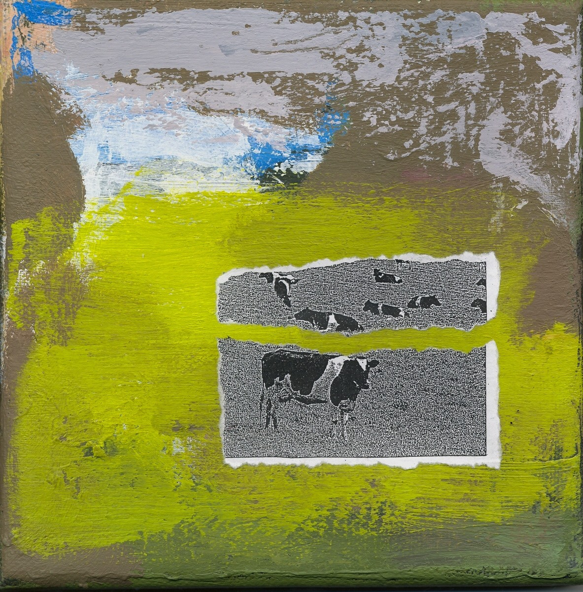 Cows in Greens