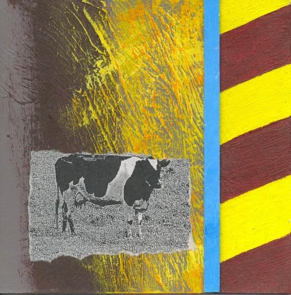 Cow in Hi-Viz